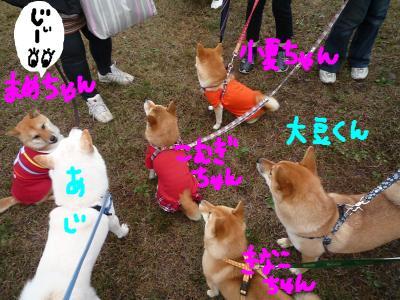 snap_nobirumaruajinikkori_2008111194713.jpg
