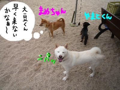 snap_nobirumaruajinikkori_2008111235631.jpg