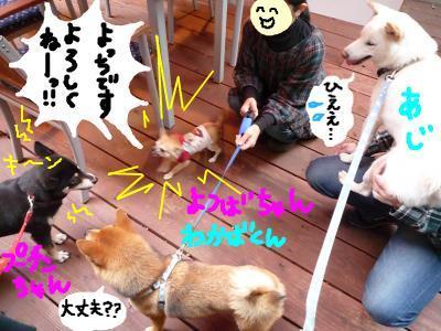 snap_nobirumaruajinikkori_20081120135.jpg