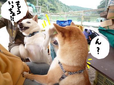 snap_nobirumaruajinikkori_200811203131.jpg