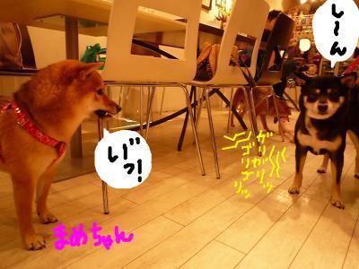 snap_nobirumaruajinikkori_200811203528.jpg