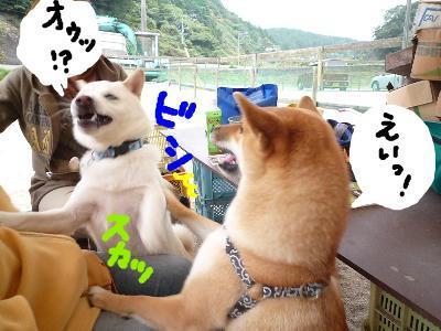 snap_nobirumaruajinikkori_200811203622.jpg