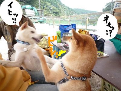 snap_nobirumaruajinikkori_200811204422.jpg