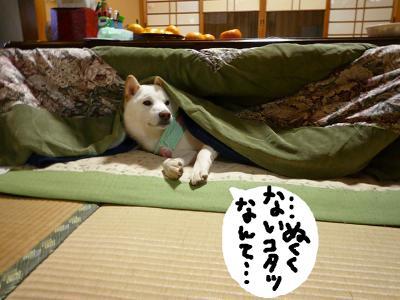snap_nobirumaruajinikkori_20081120498.jpg