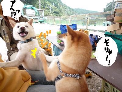 snap_nobirumaruajinikkori_200811205113.jpg