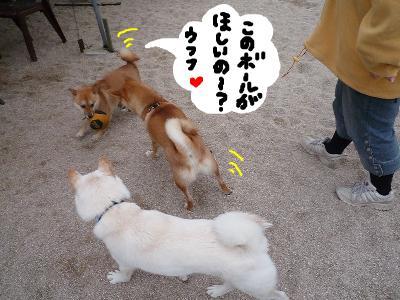 snap_nobirumaruajinikkori_200811301423.jpg
