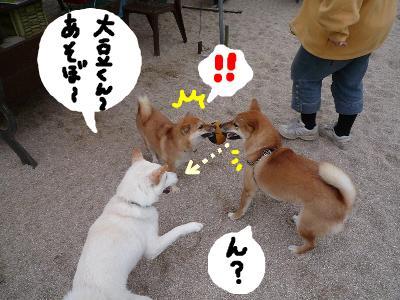 snap_nobirumaruajinikkori_200811302415.jpg