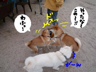 snap_nobirumaruajinikkori_200811303914.jpg