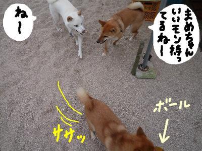 snap_nobirumaruajinikkori_20081130419.jpg