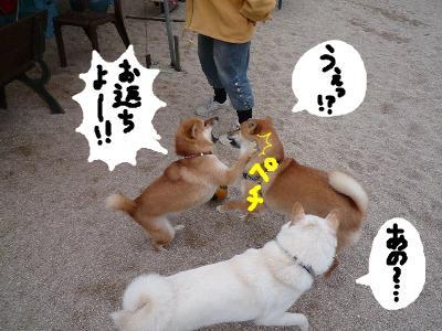 snap_nobirumaruajinikkori_200811304949.jpg