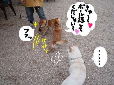 snap_nobirumaruajinikkori_200811311954.jpg