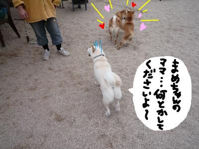 snap_nobirumaruajinikkori_200811313437.jpg