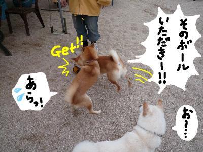 snap_nobirumaruajinikkori_20081131834.jpg