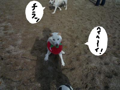 snap_nobirumaruajinikkori_2008120181138.jpg