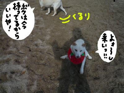snap_nobirumaruajinikkori_200812018200.jpg