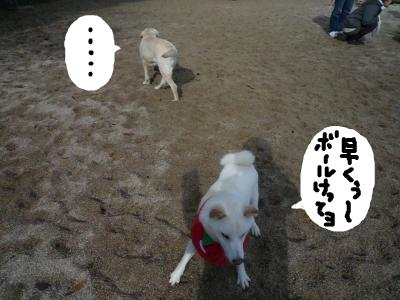 snap_nobirumaruajinikkori_200812018265.jpg
