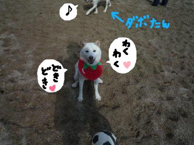 snap_nobirumaruajinikkori_20081201858.jpg