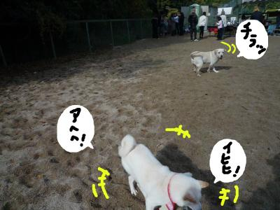 snap_nobirumaruajinikkori_200812019503.jpg