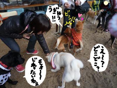 snap_nobirumaruajinikkori_200812204220.jpg