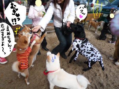 snap_nobirumaruajinikkori_20081221117.jpg