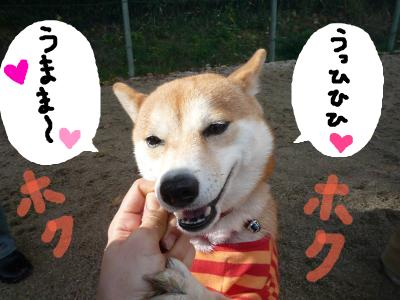 snap_nobirumaruajinikkori_200812213148.jpg