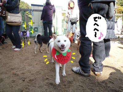 snap_nobirumaruajinikkori_20081222151.jpg