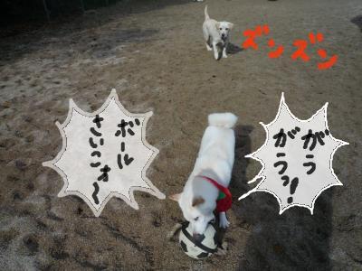 snap_nobirumaruajinikkori_2008122231644.jpg