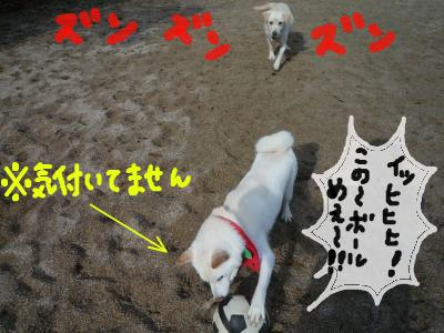 snap_nobirumaruajinikkori_2008122233644.jpg