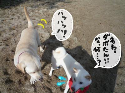 snap_nobirumaruajinikkori_20081230059.jpg