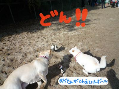snap_nobirumaruajinikkori_200812301226.jpg