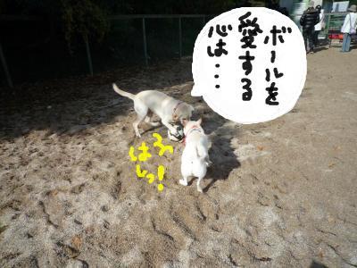 snap_nobirumaruajinikkori_200812302322.jpg