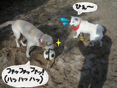 snap_nobirumaruajinikkori_200812304734.jpg