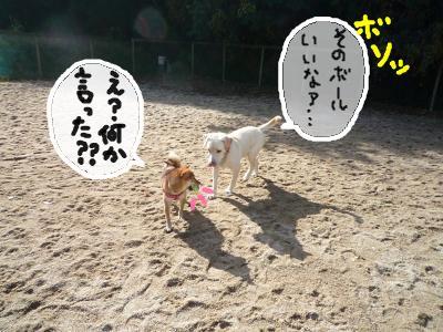 snap_nobirumaruajinikkori_200812305449.jpg