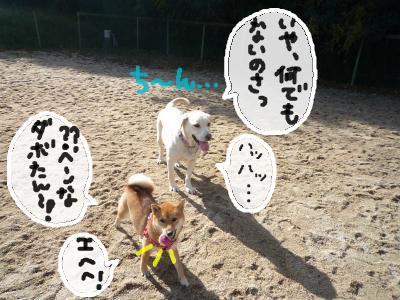 snap_nobirumaruajinikkori_20081231757.jpg