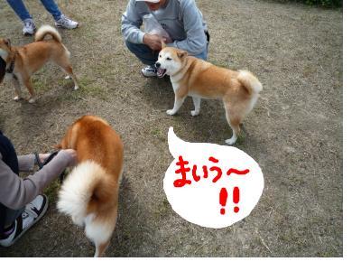 snap_nobirumaruajinikkori_200890222430.jpg