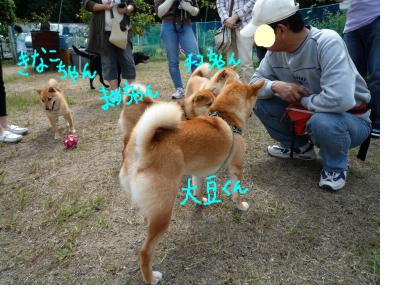 snap_nobirumaruajinikkori_200890222853.jpg