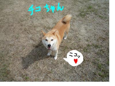 snap_nobirumaruajinikkori_20089022658.jpg