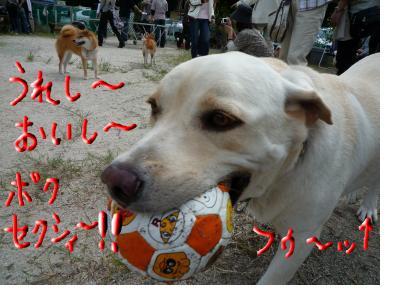 snap_nobirumaruajinikkori_200890233051.jpg