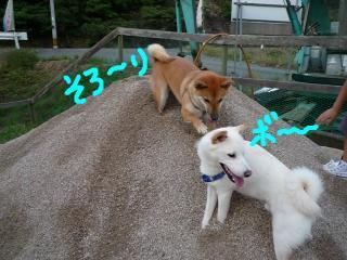 snap_nobirumaruajinikkori_200891132210.jpg
