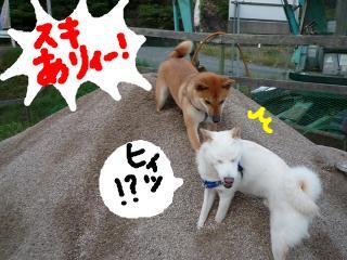 snap_nobirumaruajinikkori_200891133238.jpg