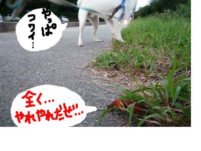 snap_nobirumaruajinikkori_200891232821.jpg