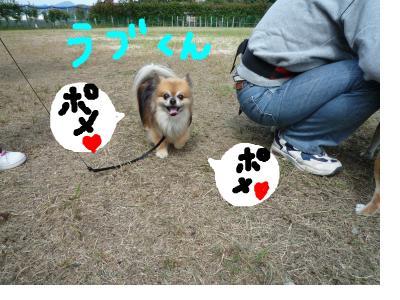 snap_nobirumaruajinikkori_200892224456.jpg