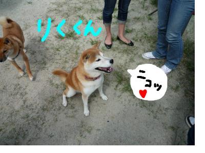 snap_nobirumaruajinikkori_200892224851.jpg