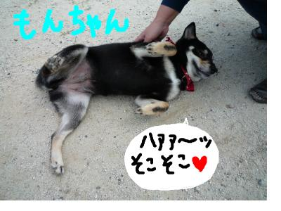 snap_nobirumaruajinikkori_200892225347.jpg