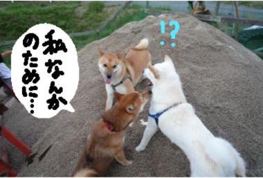 watasinotameni_convert_20080917000812.jpg