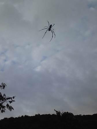 散歩 クモ