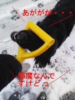 20080116-3.jpg