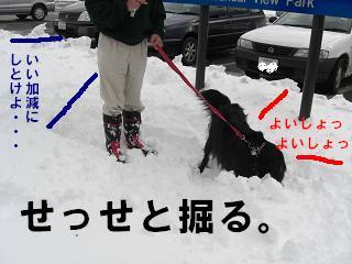 yoisyo.jpg