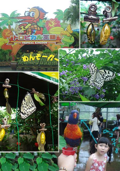 okinawa-ふるーつらんど
