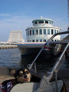 ゴンと遊覧船